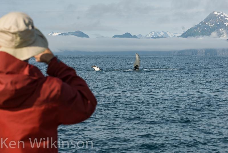 Alaska Photo Safaris whales
