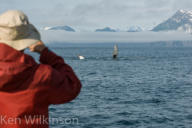 Alaska Photo Safaris whales