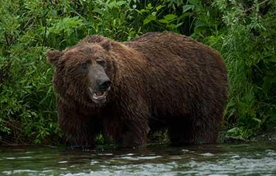Summer Alaskan Tours